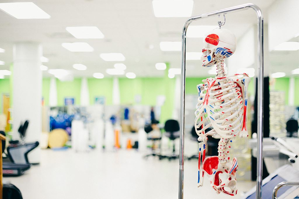 Skeleton in a Sheridan College health sciences classroom
